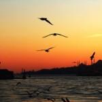 A la découverte d'Istanbul